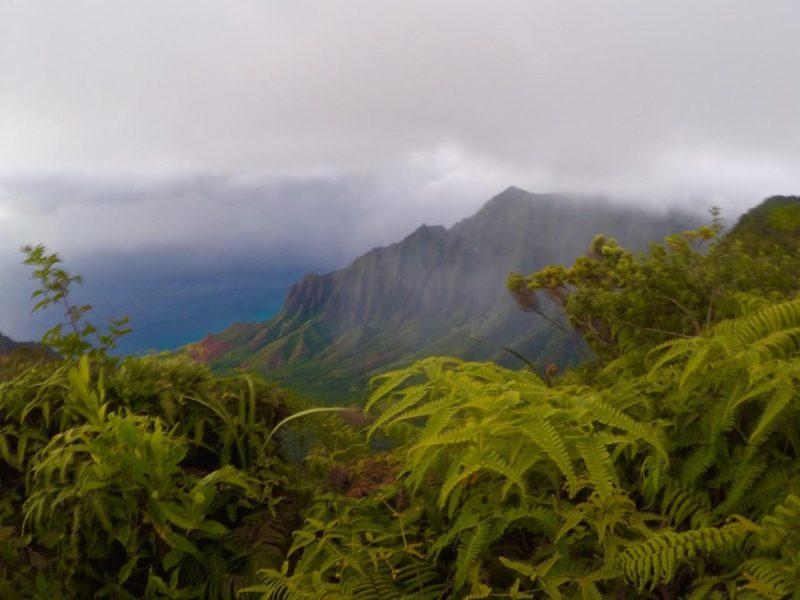 Tropical Green Kauai