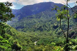 Powerline Trail Great Hike on Kauai
