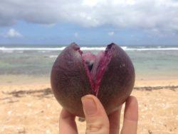 Delicious fruit Kauai