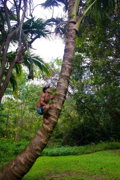 Fresh Cocos on Kauai