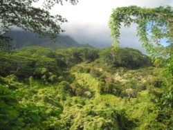 The Garden Isle Kauai Tropical Green