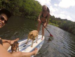 Paddle boarding Kauai style !