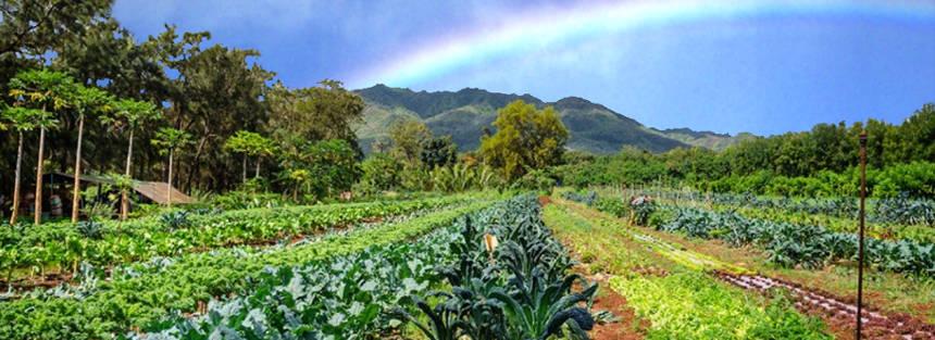 Kauai Organic Moloaa Organica