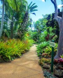 Poipu tropical gardens