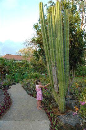 Moir garden kauai