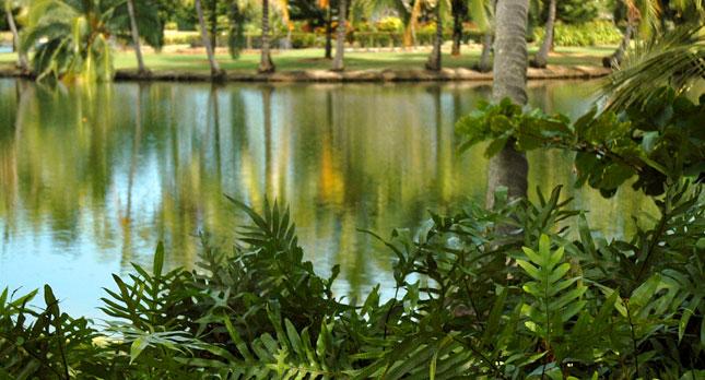 Smiths garden Wailua