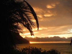 Palm trees Sunset Hawaii