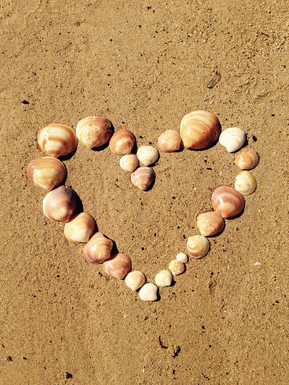 A Heart Shell on the sand