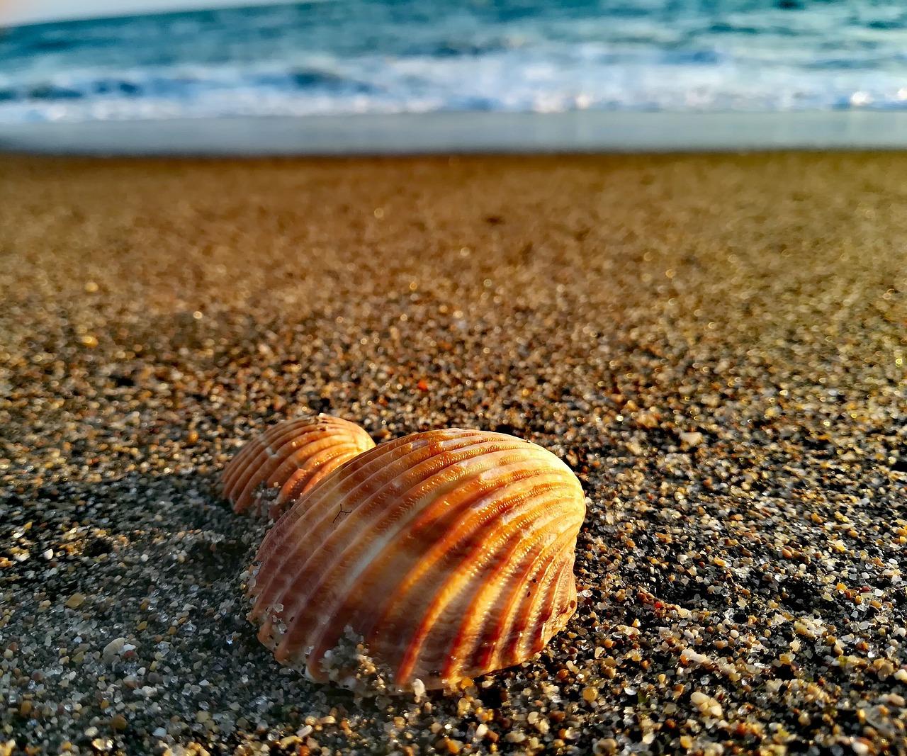 Looks like a Sunrise shell