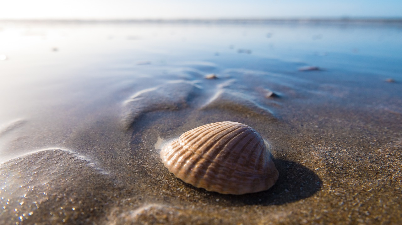 Shell in the ocean