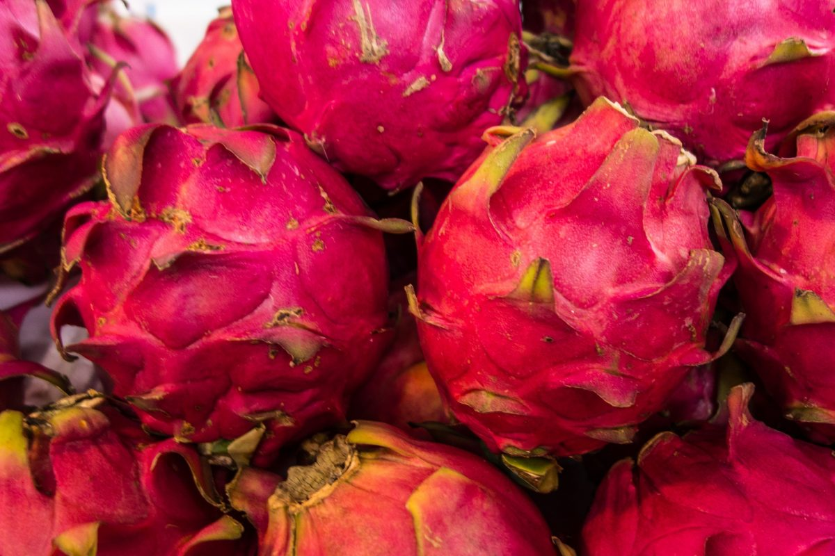 Bright Pink Dragonfruit