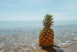 Pineapple by the ocean