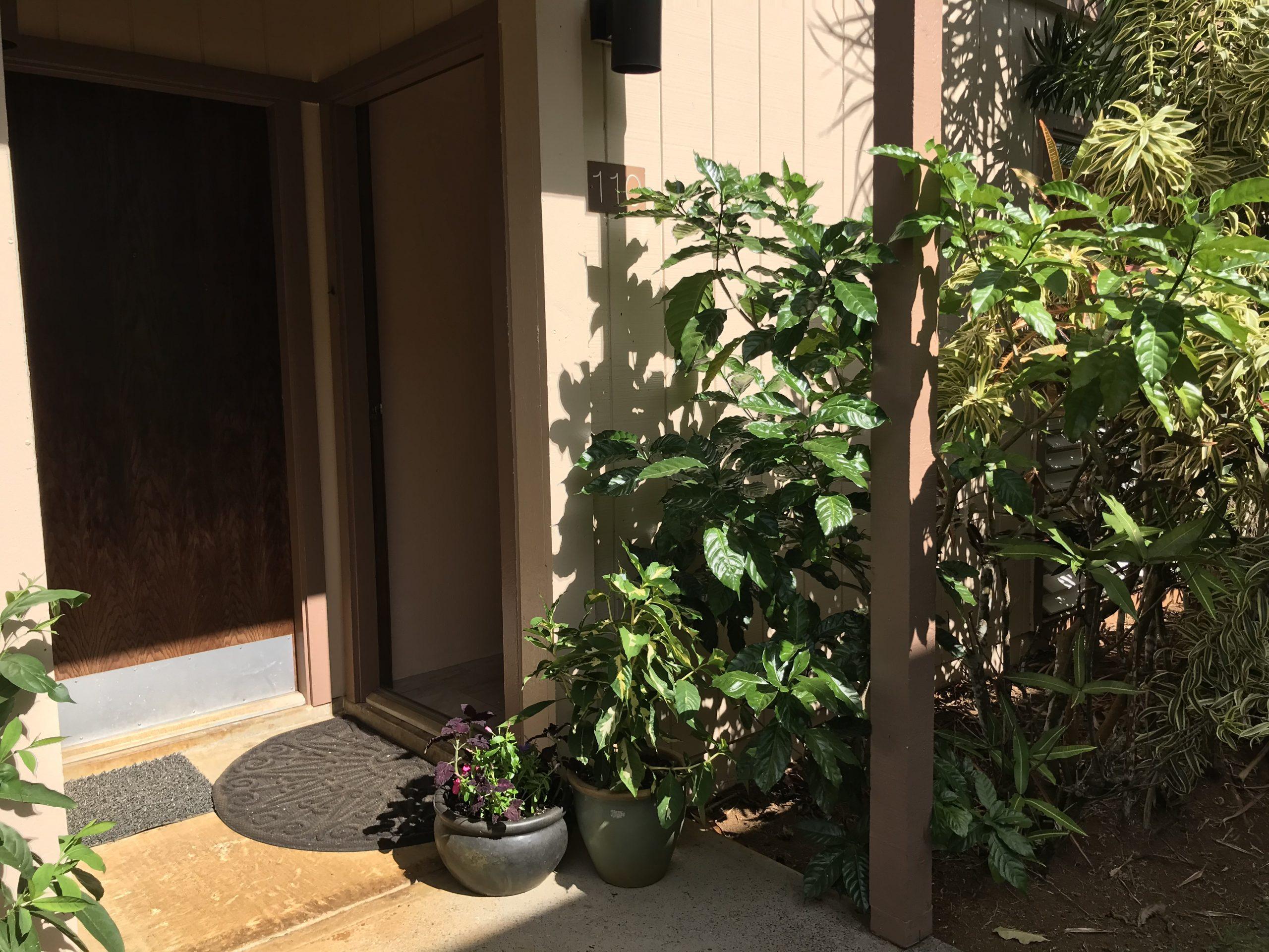 Suite Entrance Tropical garden